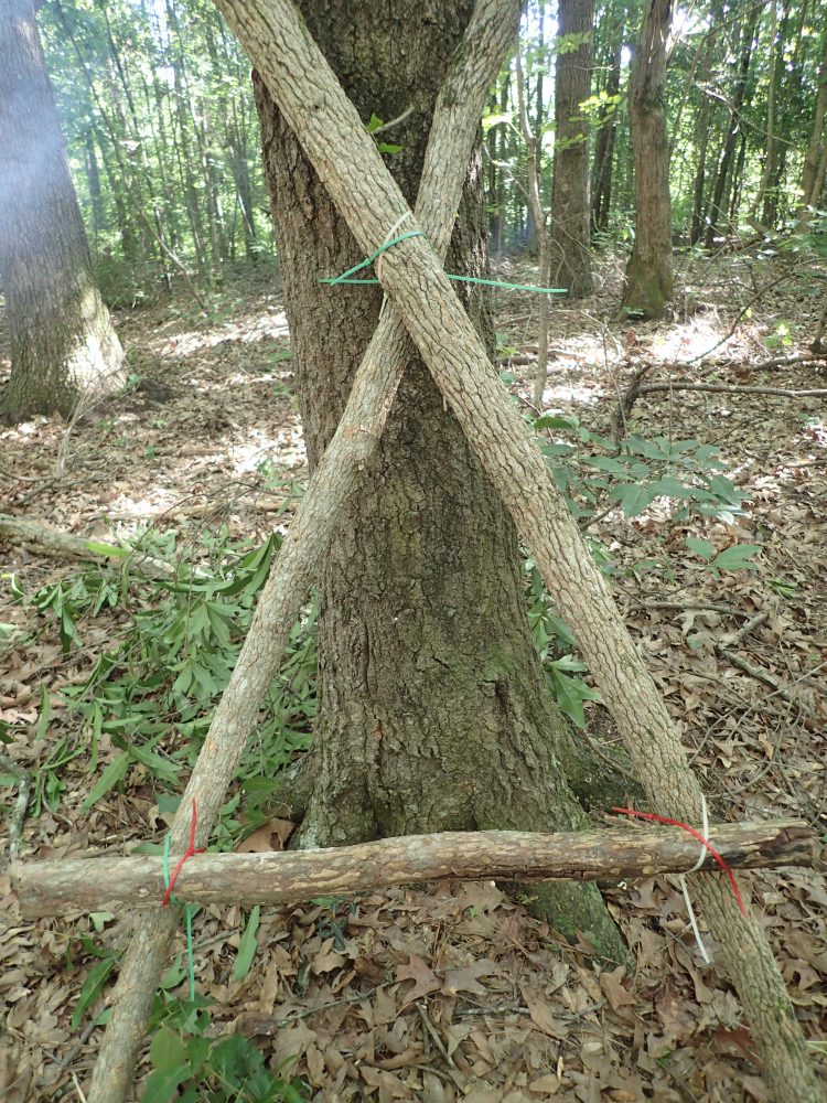 Simple camp stool was quickly made with zip ties. More elaborate pieces of impromptu furniture can also be made with zip ties.