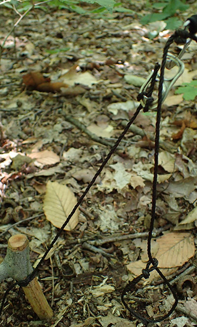 Twitch-up trap keeps tabs under tension while attached noose stays ready to snare an animal. It uses power of a bent sapling, held by the tabs and one wooden stake in the ground.